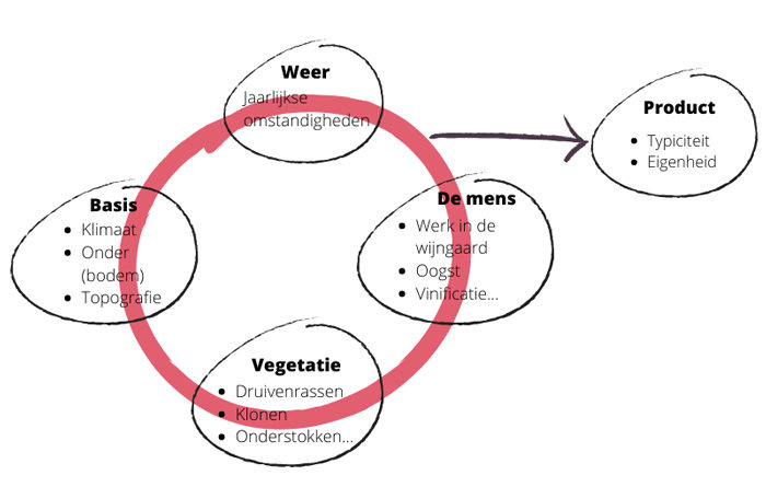 Infografiek: wat betekent het begrip terroir nu juist?