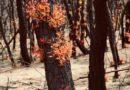 De impact van de bosbranden op de Australische wijnbouw