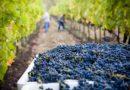Klimaatverandering en noodzakelijke aanpassingen in de wijnbouw
