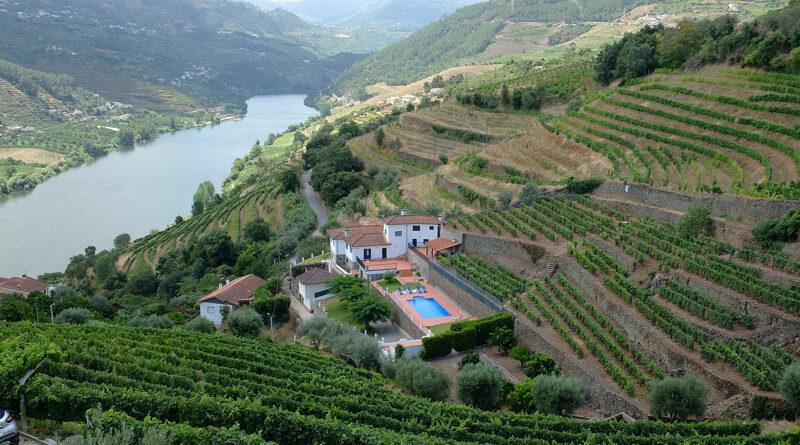 Wijn uit de Douro, een unieke wijnstreek.