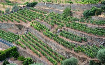 Terrasbouw in de Douro, een unieke wijnstreek.