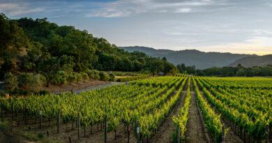 Wijngaard gelegen bij een bos